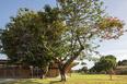 fazenda canuanã rosenbaum + aleph zero